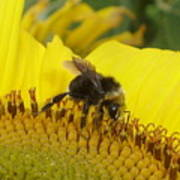 Bee On Sunflower 2 Art Print