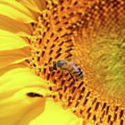 Bee On Sunflower Summer Nature Scene Art Print