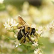 Bee On Top Of Things Art Print