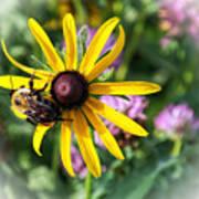 Bee On Yellow Coneflower Art Print