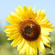 Bee On Yellow Sunflower Art Print