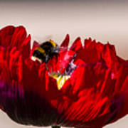 Bee Right Back With Red Flower Art Print