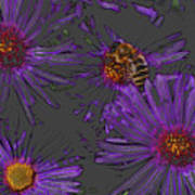 Bee With Asters On Gray Art Print