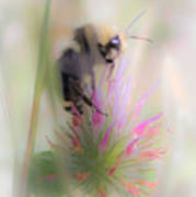 Bee2 Art Print
