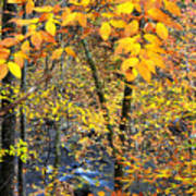 Beech Leaves Birch River Art Print by Thomas R Fletcher