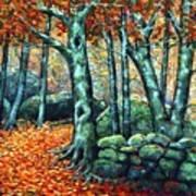 Beech Woods Art Print