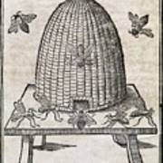 Bees And Beehive, 17th Century Artwork Art Print