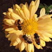 Bees On Feast Art Print