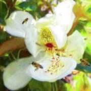 Bees On Open Magnolia Art Print
