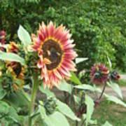 Bees On Sunflower 108 Art Print