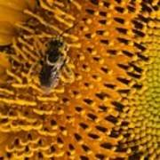 Bee's Sunflower Art Print