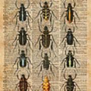 Beetles Bugs Zoology Illustration Vintage Dictionary Art Art Print