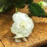 Begonia In Repose Art Print