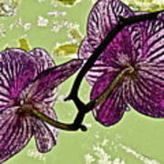 Behind The Orchids Art Print