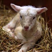 Behold The Lamb Art Print