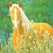 Belgian Draft Horse Art Print