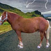 Belgian Horse Art Print