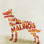 Belgian Malinois Watercolor Painting / Typographic Art Art Print