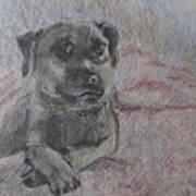 Bella In Pencil Art Print