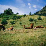 Bells And Cows Art Print