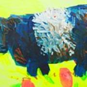 Belted Galloway Cow Looking At You Art Print