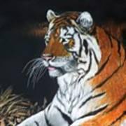 Bengal Boy  Sold Art Print