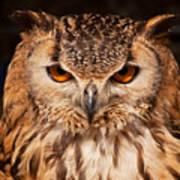 Bengal Owl Art Print