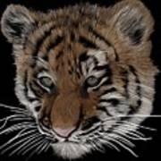 Bengal Tiger Cub Art Print