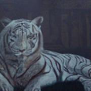 Bengala Tiger Art Print