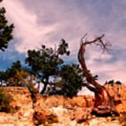 Bent The Grand Canyon Art Print
