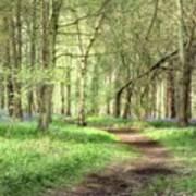 Bentley Woods, Warwickshire #landscape Art Print
