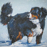Bernese Mountain Dog In Drift Art Print