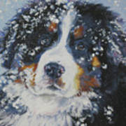 Bernese Mountain Dog Puppy Art Print