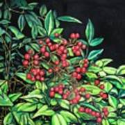 Berries - Pyracantha Art Print