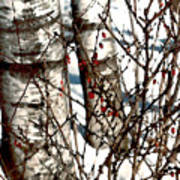 Berries And Birches Art Print