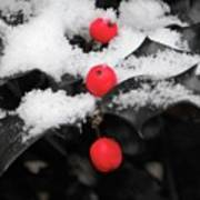 Berries In Snow Art Print