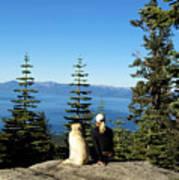 Best Buddies At Lake Tahoe Art Print