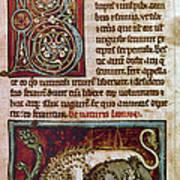 Bestiary: Lion Art Print