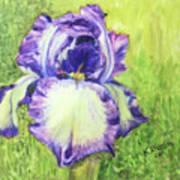 Betty's Iris Art Print