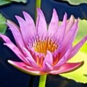 Beyond Beautiful Water Lily Art Print
