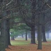 Beyond The Pines Art Print