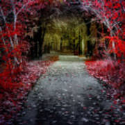 Beyond The Red Leaves Art Print