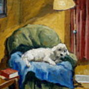 Bichon Frise On Chair Art Print by Thor Wickstrom