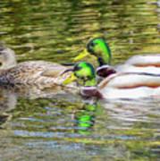 Bidwell Ducks In Fall Art Print