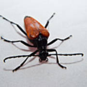 Big Beetle Art Print