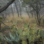 Big Bend Fog On Lost Mines Trail Art Print