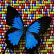 Big Blue Butterfly Art Print