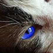Big Blue Eyes Cat Art Print