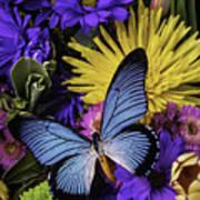 Big Blue Wings Art Print