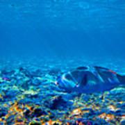 Big Fish. Underwater World. Art Print